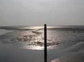 het drooggevallen wad Friesland
