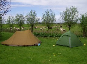 kamperen naast de lammetjes Friesland