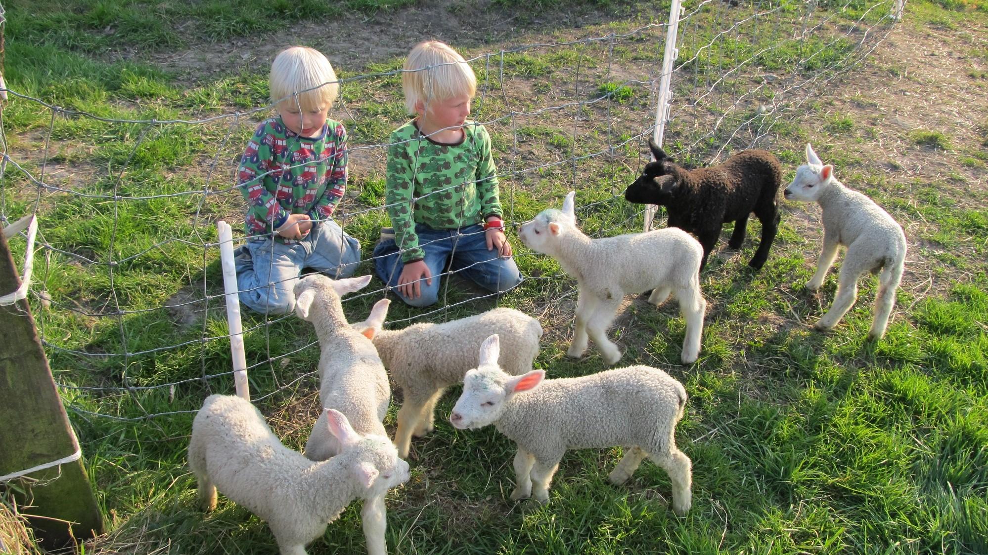 Lammetjes vakantiehuis Friesland