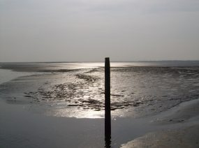the Wadden Sea Friesland Netherlands